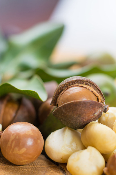 macadamia nut havest up close